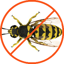 wasp pest control services
