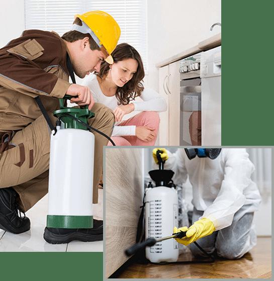 spider removal spokane