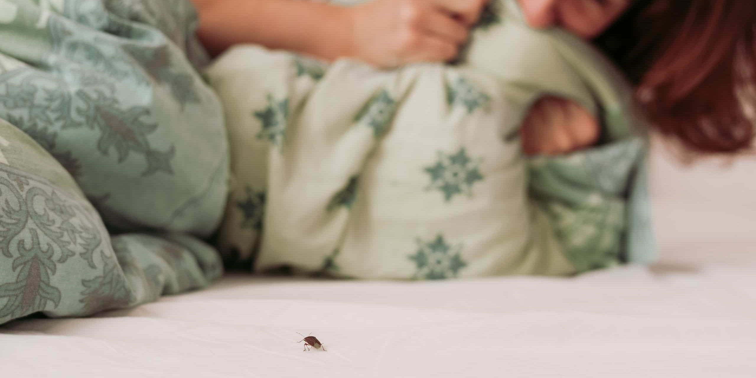 woman in bed scared of stink bug